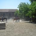 equitazione_-02