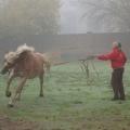 equitazione_-03